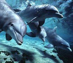 dolphins db