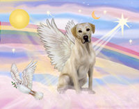 yellow_labrador_angel